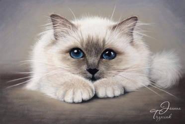 Kitty by JTrzeciak