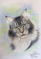 My cat by JTrzeciak