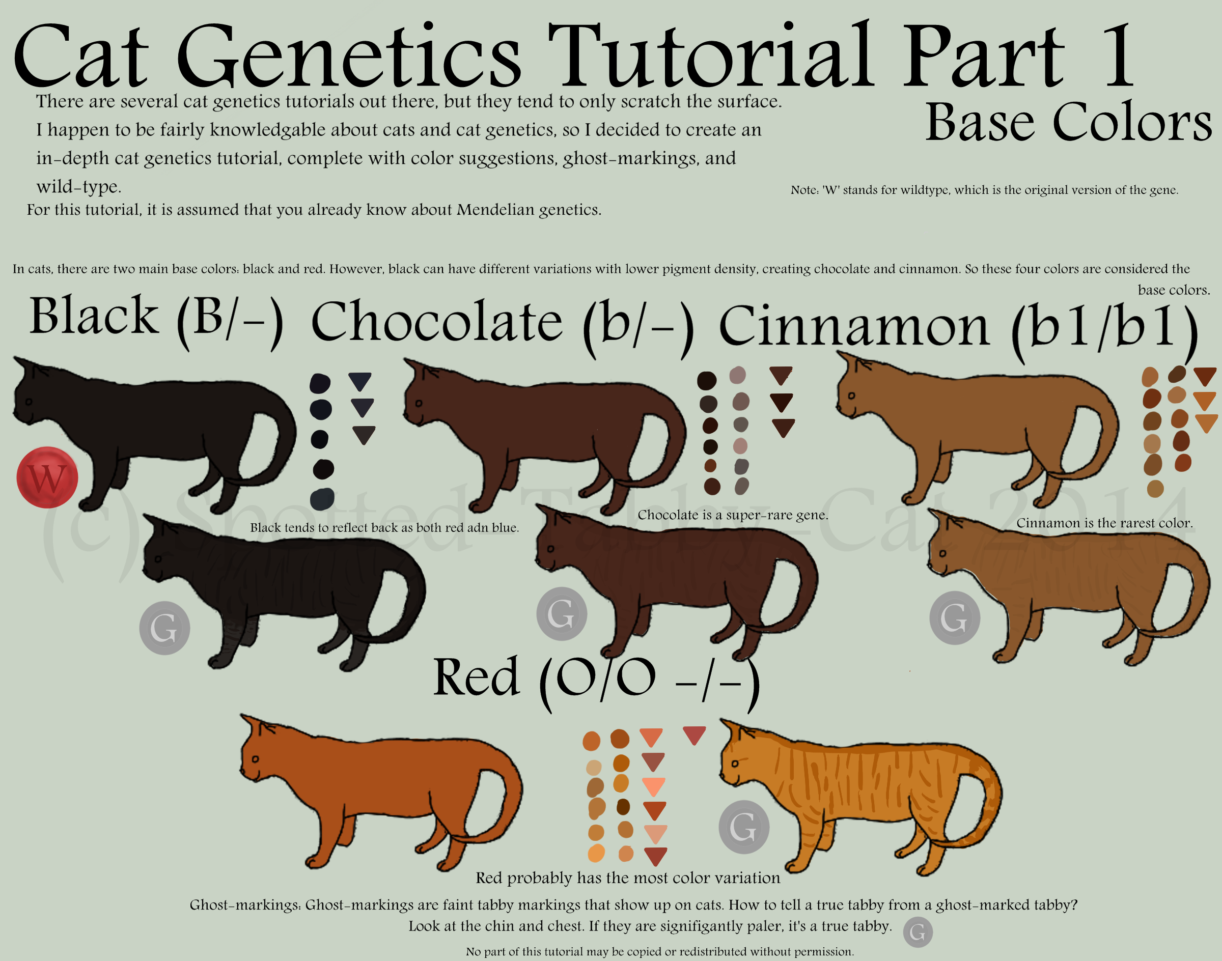 Cat Genetics Tutorial Part 1 (Base Colors) by Spotted-Tabby-Cat on ...