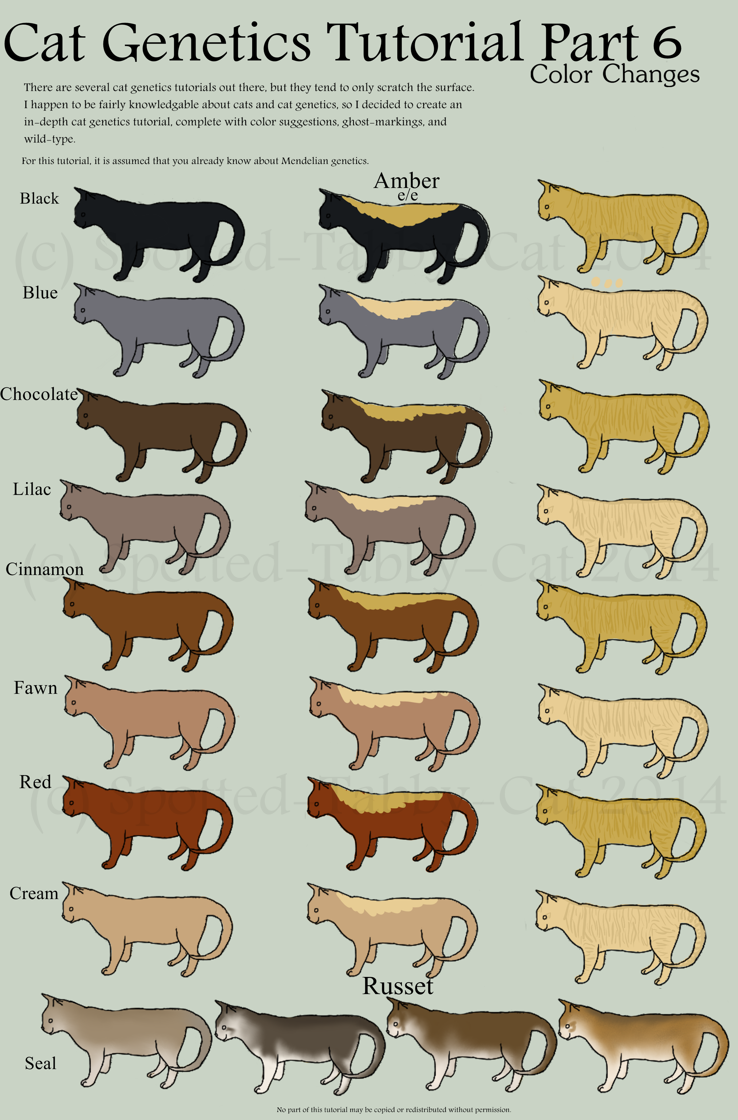 Cat Genetics Tutorial Part 7 Color Changes By Spotted