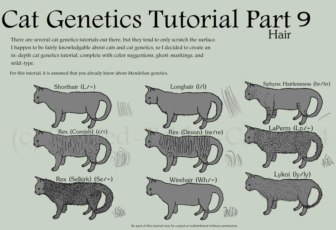 Cat Genetics Tutorial Part 9 (Hair) by Spotted-Tabby-Cat on DeviantArt