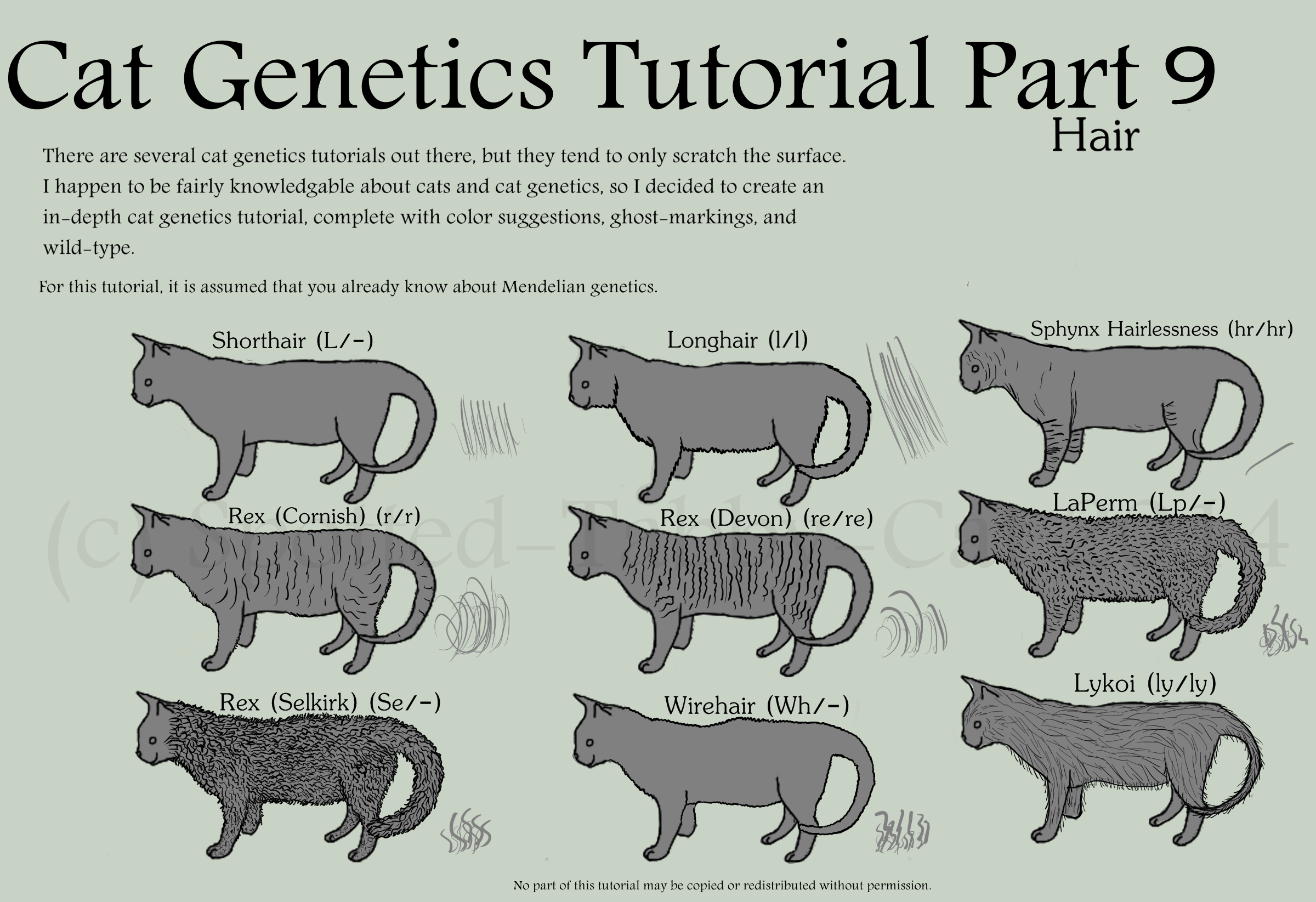 Cat Genetics Tutorial by Spotted-Tabby-Cat on DeviantArt