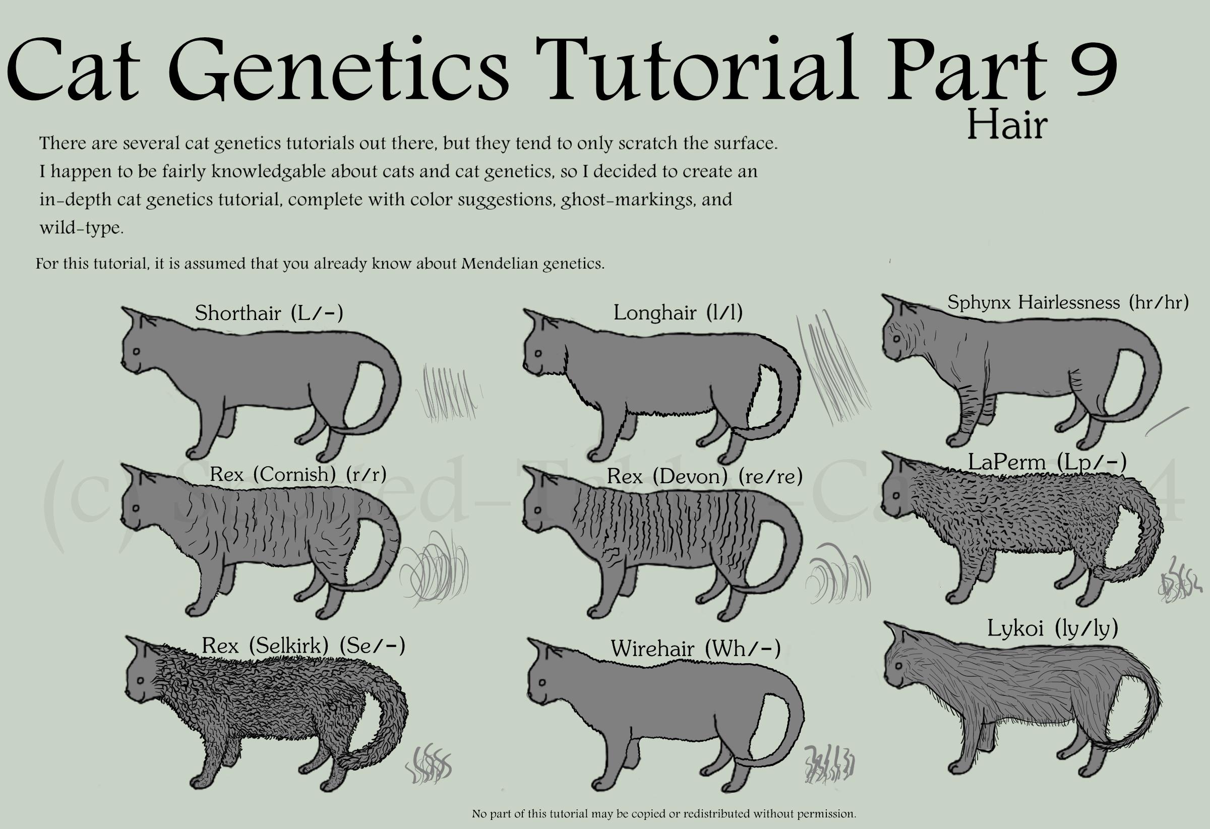Medium Hair Cat Genetics