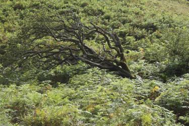 Windswept Tree Stock by XerStock