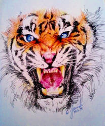 Eye Of The Tiger by Kempping