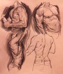 More muscle studies by Vetyr