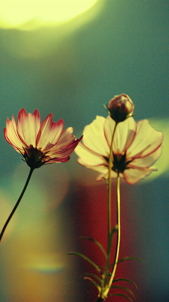 Flower Wallpapers Iphone 6s Plus By Mrjok2016 On Deviantart