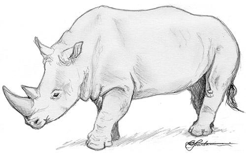 Rhino by CSIllustrator