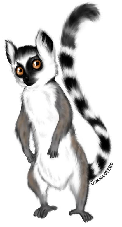 Rupert the Lemur