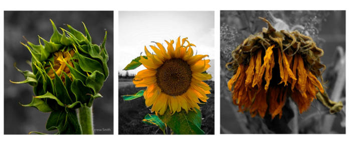 Triptych by JenRichardson