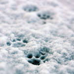 Paw in snow by Ambyon