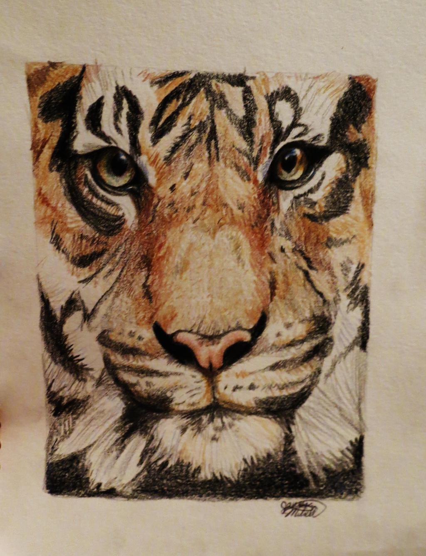 Tiger Face by Jaylynessa on DeviantArt