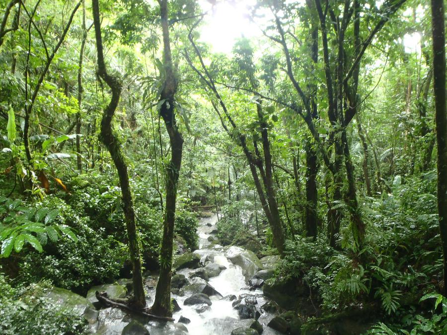 PuertoRico~Yunque, 'RainForest' 2 by Raion-Okami