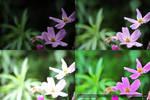 Flowers - Comparison