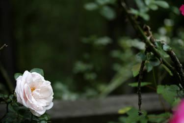 Solitary Beauty by TheBishounen55