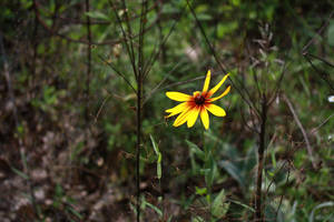 Lone Flower Revealed by TheBishounen55