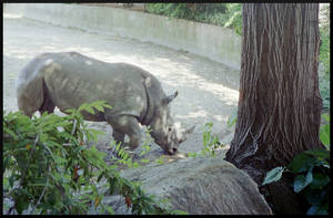 The Stately Rhino by TheBishounen55
