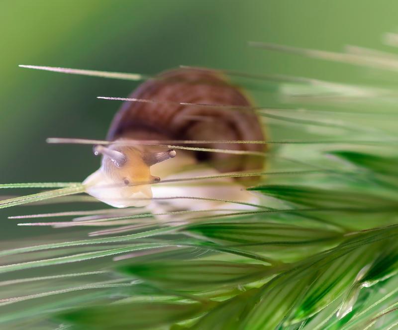 snail macro by chirkhef