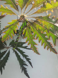 giant libella ~on the plant ~ traped in the hous
