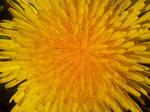 SPRING BEFOR THE WINTER! ~ SUNSHINE 2 by DAGAIZM