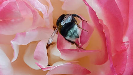 BEE-HIND ~ on my balcony by DAGAIZM