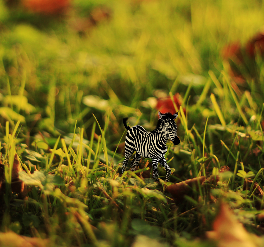 zebra in my lea by Zi0oTo