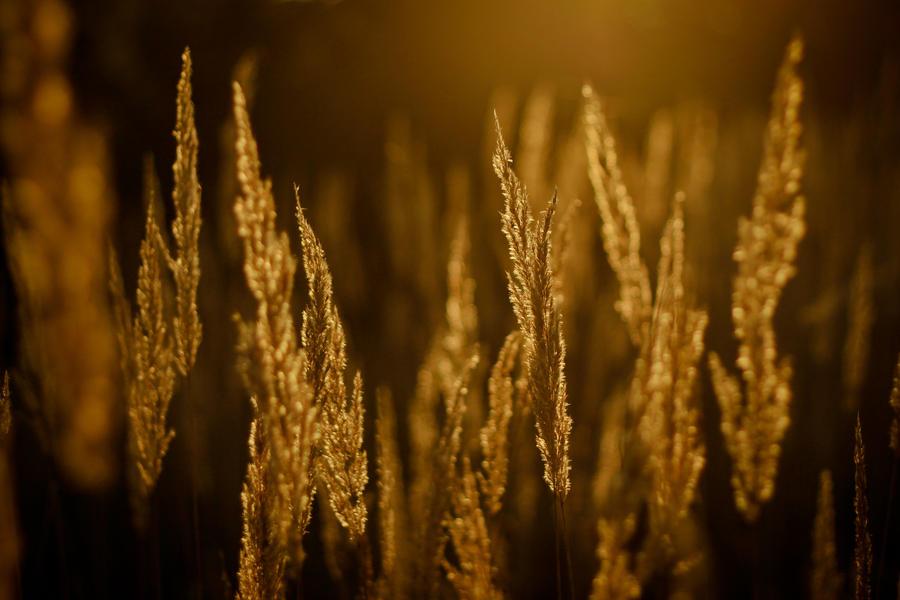golden autumn by Zi0oTo