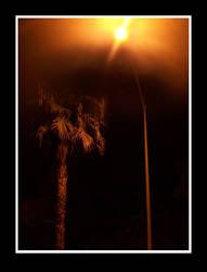 Palm Night