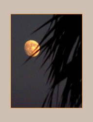 shadows over the moon