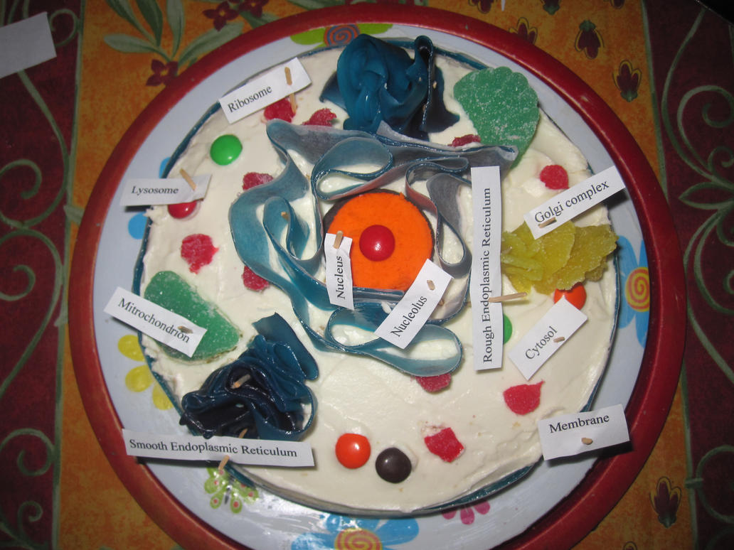 Animal Cell Project Using Cake