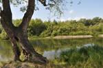 A tree near the water by Tumana-stock