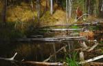 Fallen trees in the water