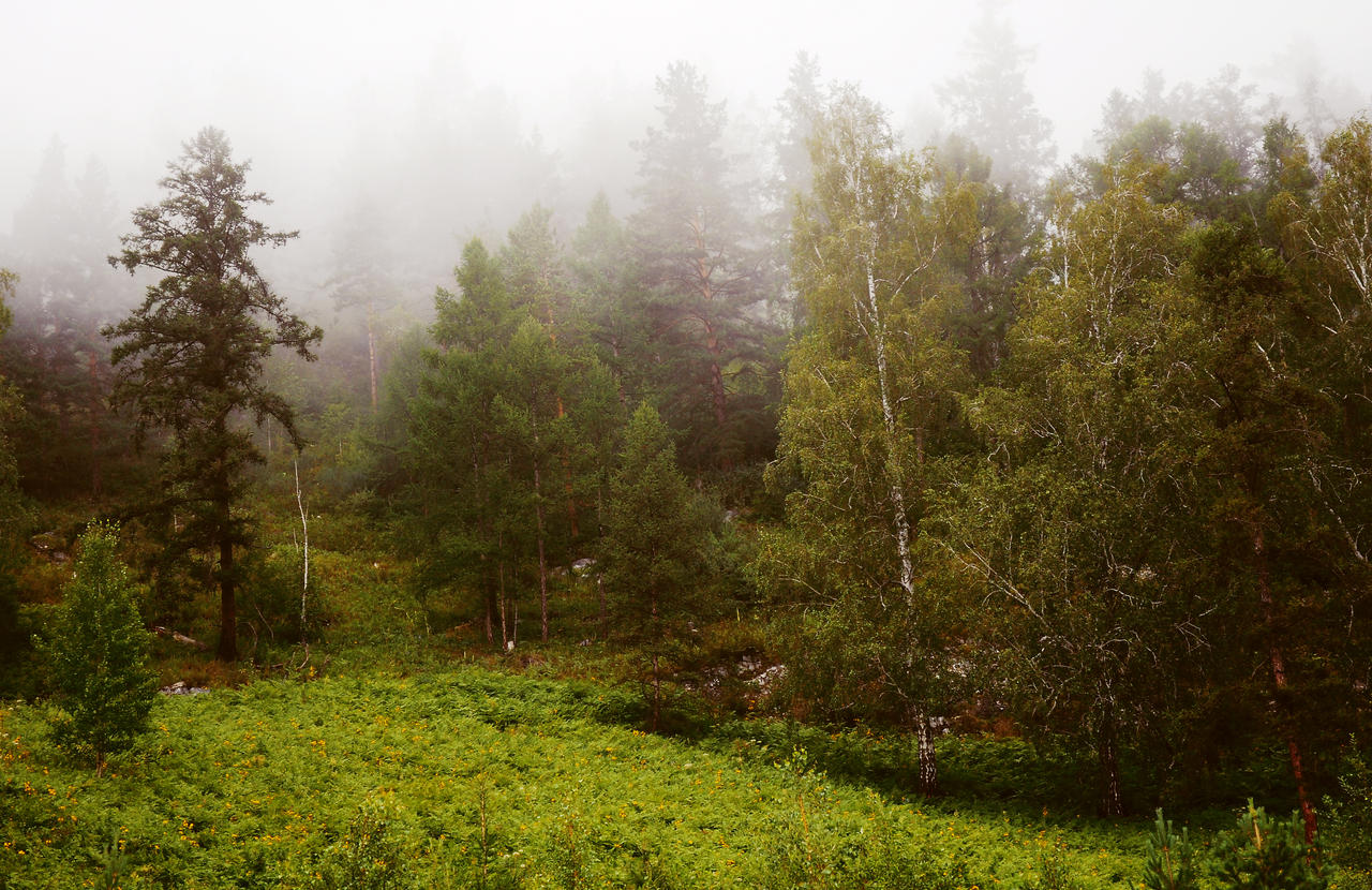 Fog in the forest by Tumana-stock