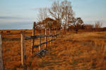 Old fence in field