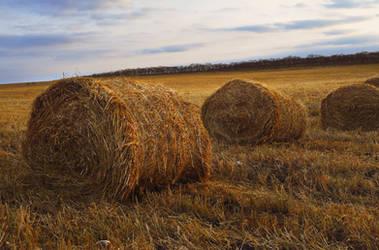 Hay field by Tumana-stock