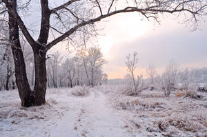 Trees in the Snow3 by Tumana-stock