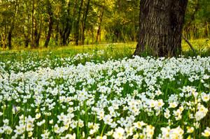 Flower Fields by Tumana-stock