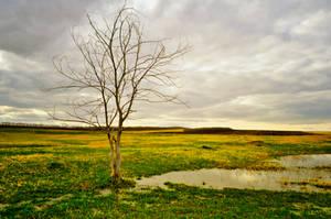 Tree by Tumana-stock