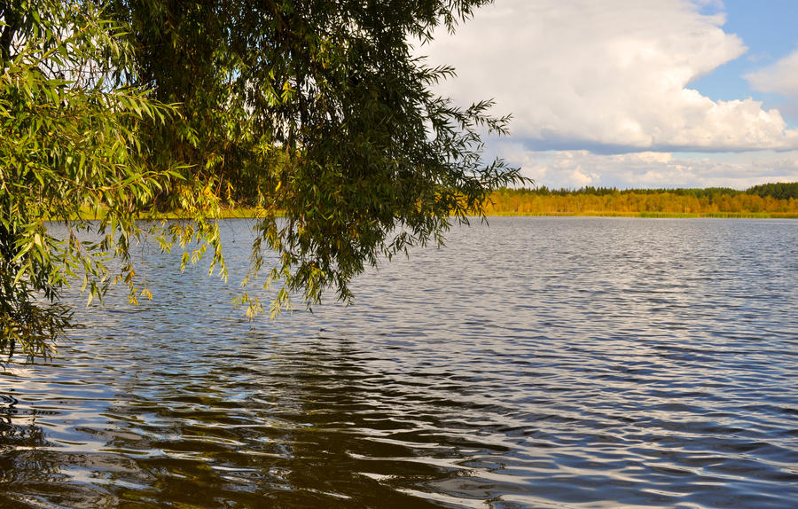 Branches Over The Water by Tumana-stock