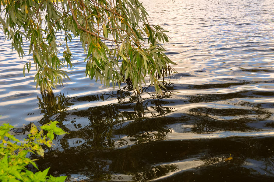 Trees over water by Tumana-stock