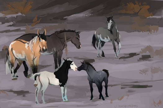 Why are there random foals out here? [Claiming]