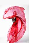 Belly Dancer Veil Stock 11