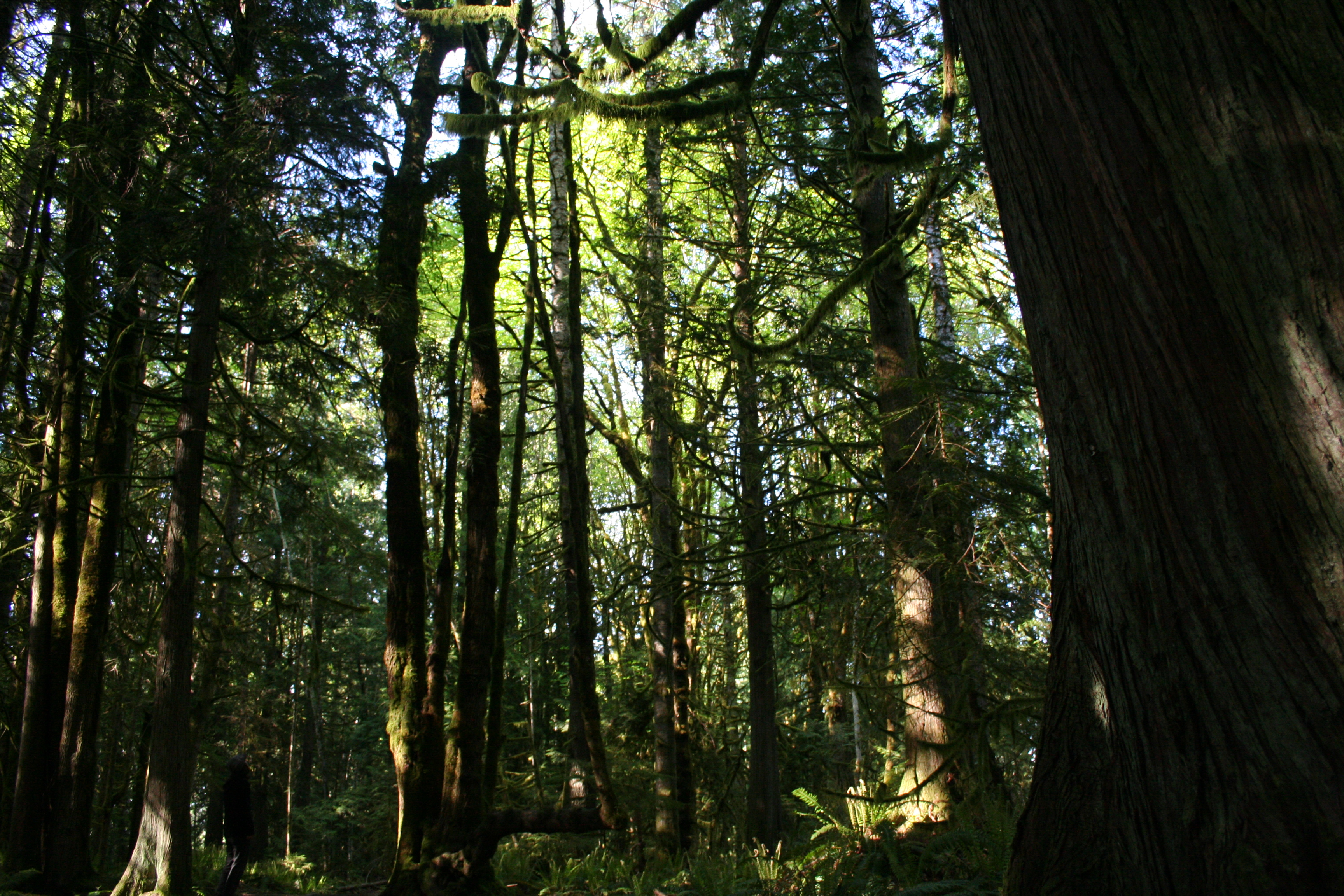 Image gallery evergreen forest for The evergreen