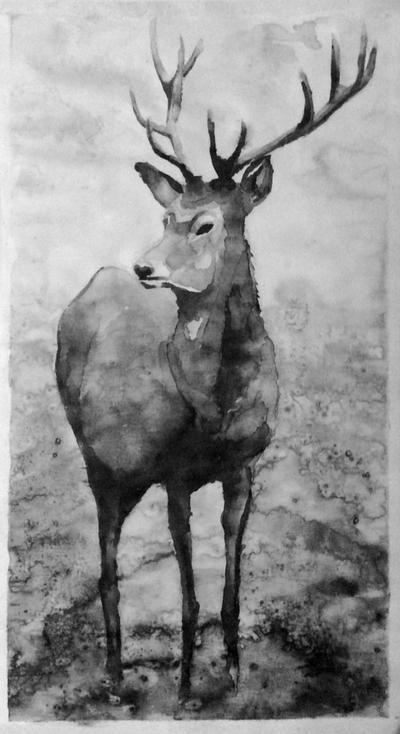 Wild by ArtStudier