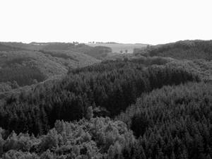 Luxembourgish Countryside 3