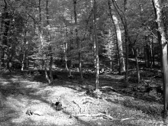 Scheierbierg Forest by maradong