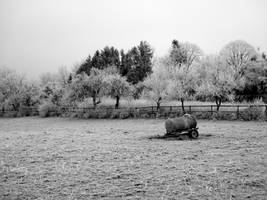 Empty and thus lonely pasture by maradong