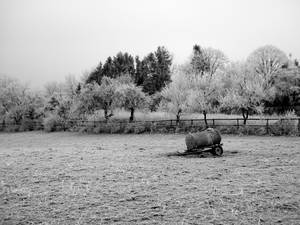 Empty and thus lonely pasture