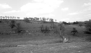 Luxembourgish Countryside