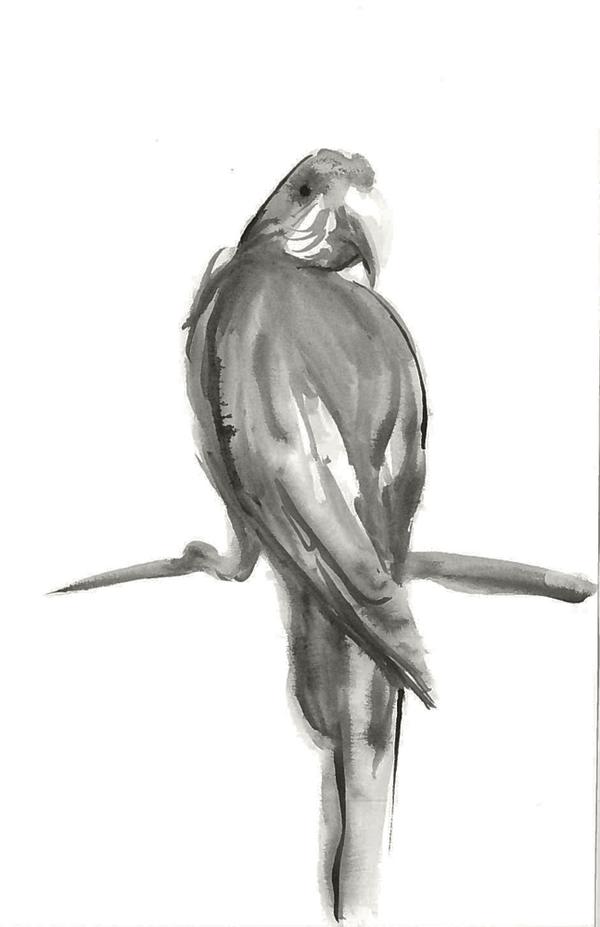 Ink Parrot by Kiulani